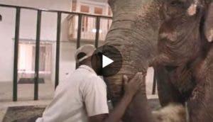 elefanta-aislada-cautiverio-cadenas