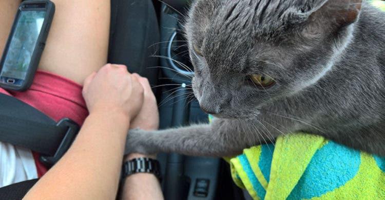 gatito-moribundo-sostiene-mano-familia-1