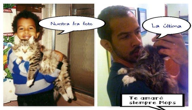 gatito-moribundo-sostiene-mano-familia-5