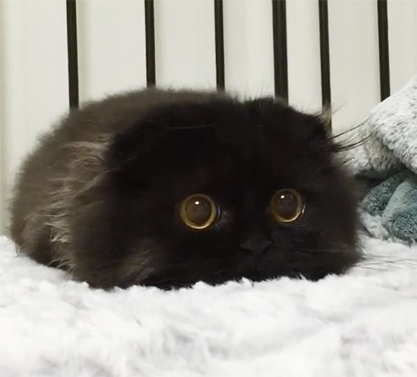 los-gatitos-bebes-mas-adorables-1