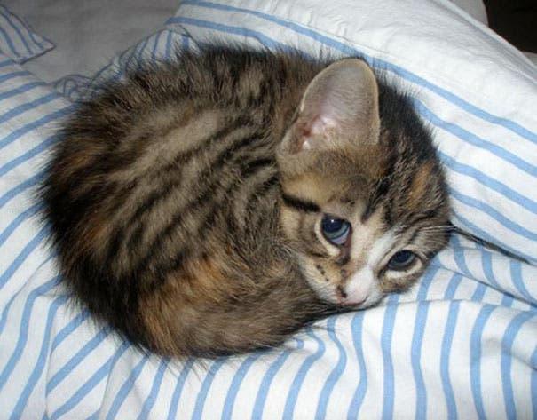los-gatitos-bebes-mas-adorables-10