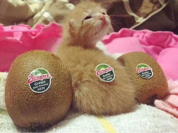 los-gatitos-bebes-mas-adorables-11