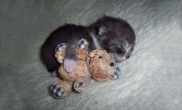 los-gatitos-bebes-mas-adorables-13