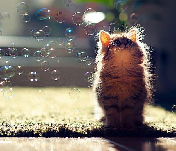 los-gatitos-bebes-mas-adorables-14