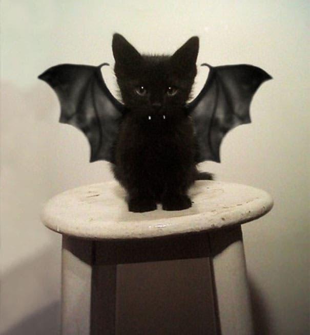 los-gatitos-bebes-mas-adorables-15