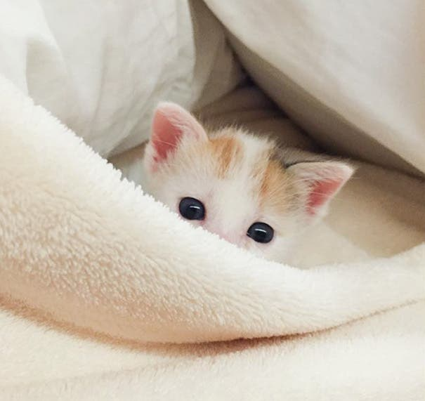 los-gatitos-bebes-mas-adorables-16