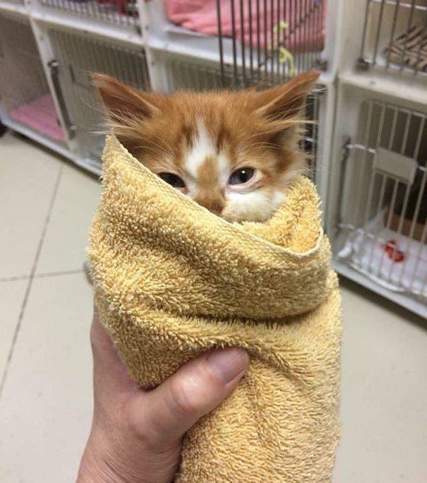 los-gatitos-bebes-mas-adorables-17