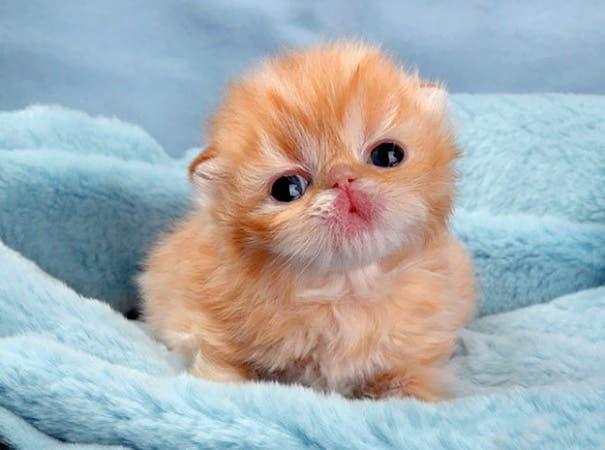 los-gatitos-bebes-mas-adorables-20