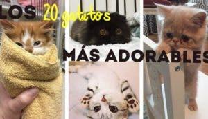 los-gatitos-bebes-mas-adorables