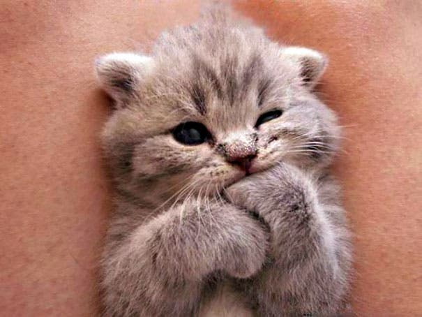 los-gatitos-bebes-mas-adorables-4