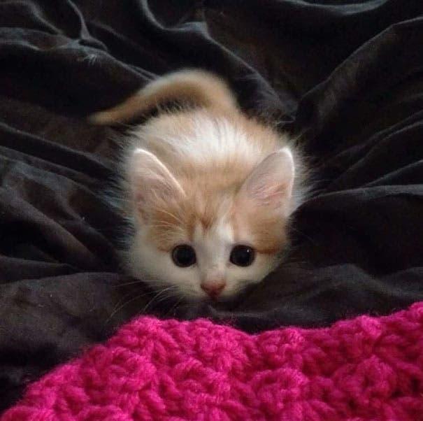 los-gatitos-bebes-mas-adorables-5