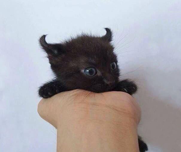 los-gatitos-bebes-mas-adorables-6