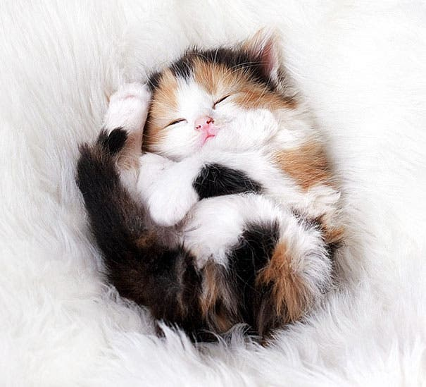 los-gatitos-bebes-mas-adorables-7