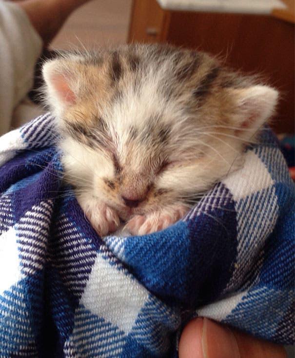los-gatitos-bebes-mas-adorables-8