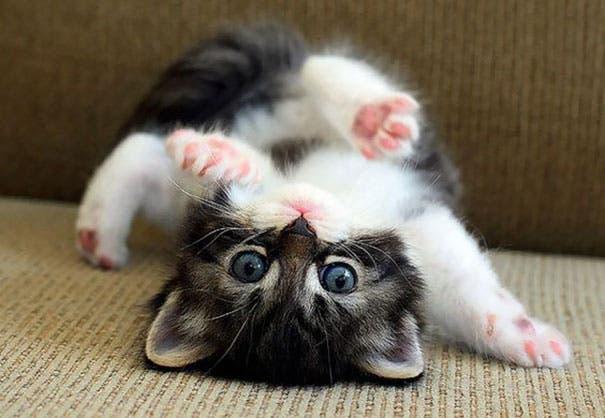 los-gatitos-bebes-mas-adorables-9