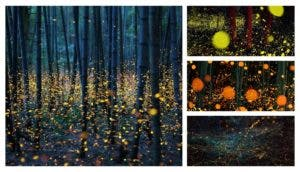 magicas-fotos-bosques-luciernagas-japon