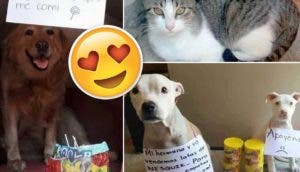 mascotas-traviesas-venden-portada