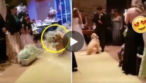 perrito-lleva-los-anillos-en-boda