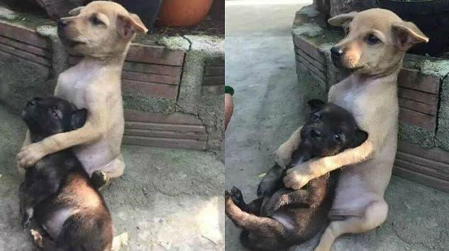perrito-que-abraza-a-su-amigo-adoptado2