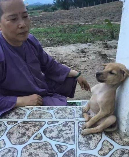 perrito-que-abraza-a-su-amigo-adoptado3