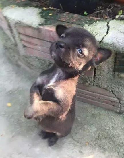 perrito-que-abraza-a-su-amigo-adoptado4