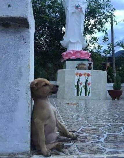 perrito-que-abraza-a-su-amigo-adoptado5