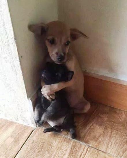 perrito-que-abraza-a-su-amigo-adoptado7