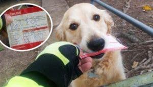 perro-ama-recibir-mensajes-del-cartero1 - Copy