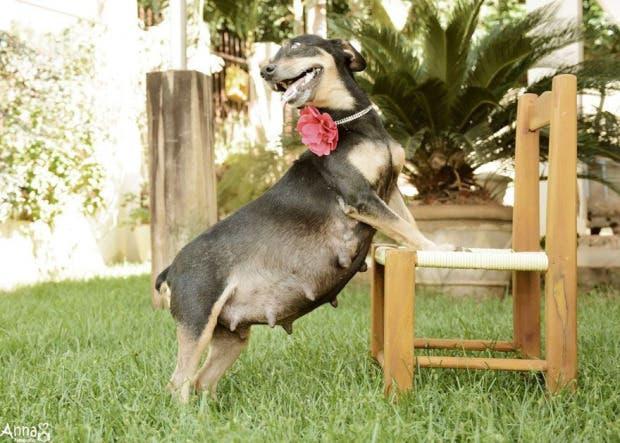 perro-mama-salchicha-6-cachorritos-2