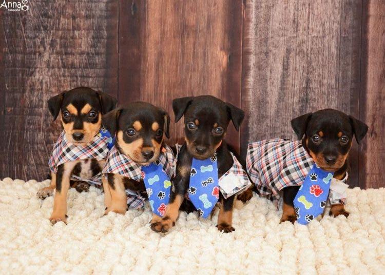 perro-mama-salchicha-6-cachorritos-8