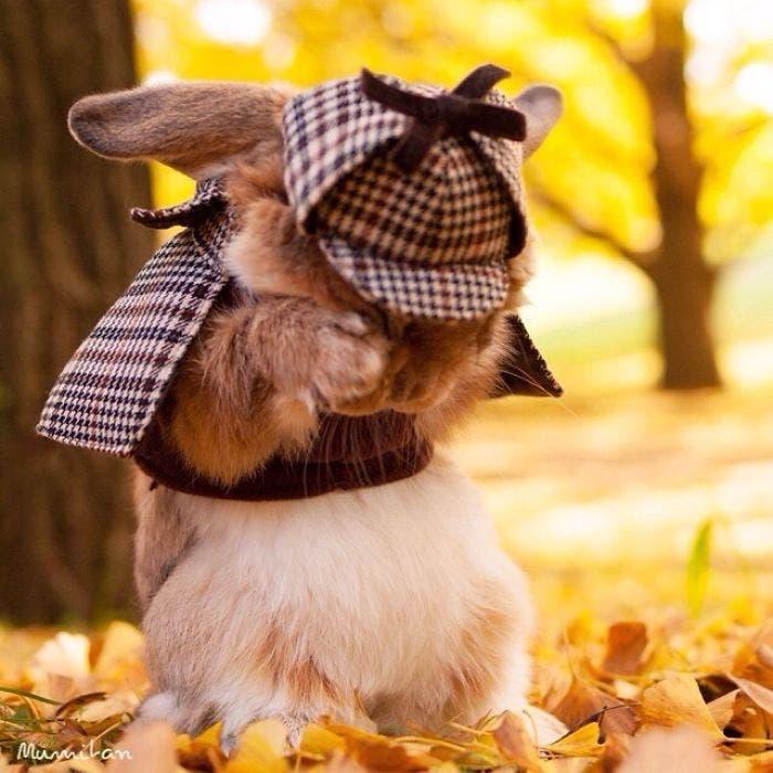 puipui-el-conejo-mas-fashionista-