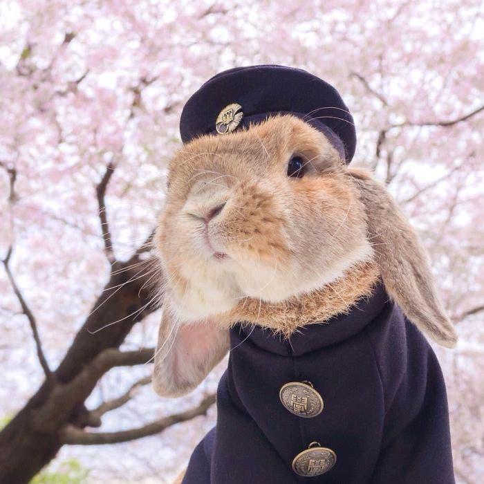 puipui-el-conejo-mas-fashionista-1