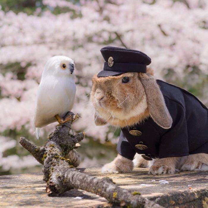 puipui-el-conejo-mas-fashionista-2