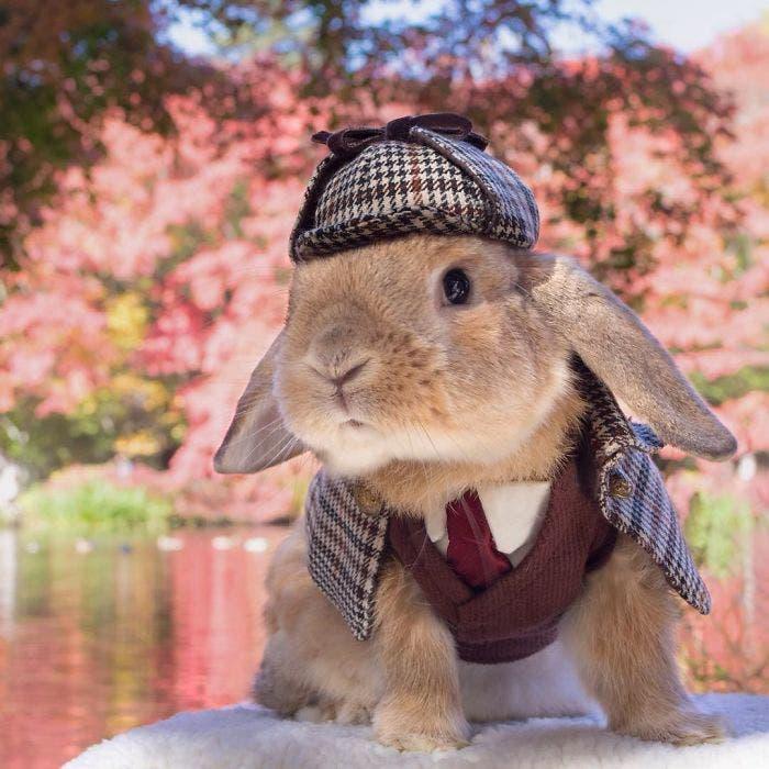puipui-el-conejo-mas-fashionista-3
