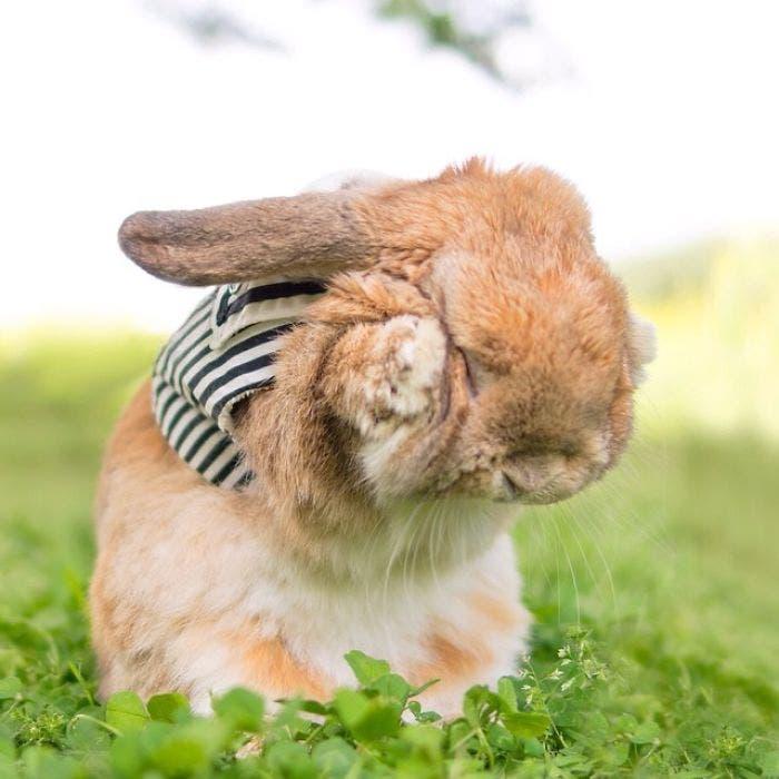 puipui-el-conejo-mas-fashionista-5