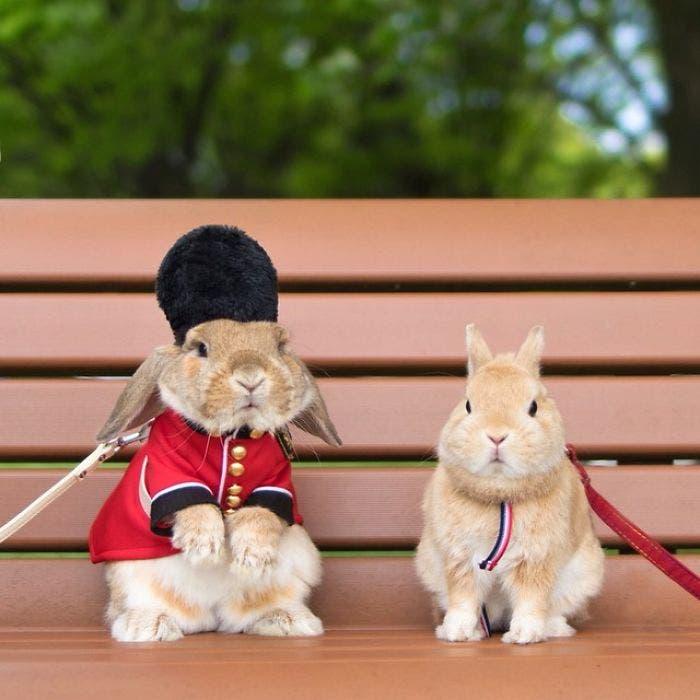 puipui-el-conejo-mas-fashionista-6