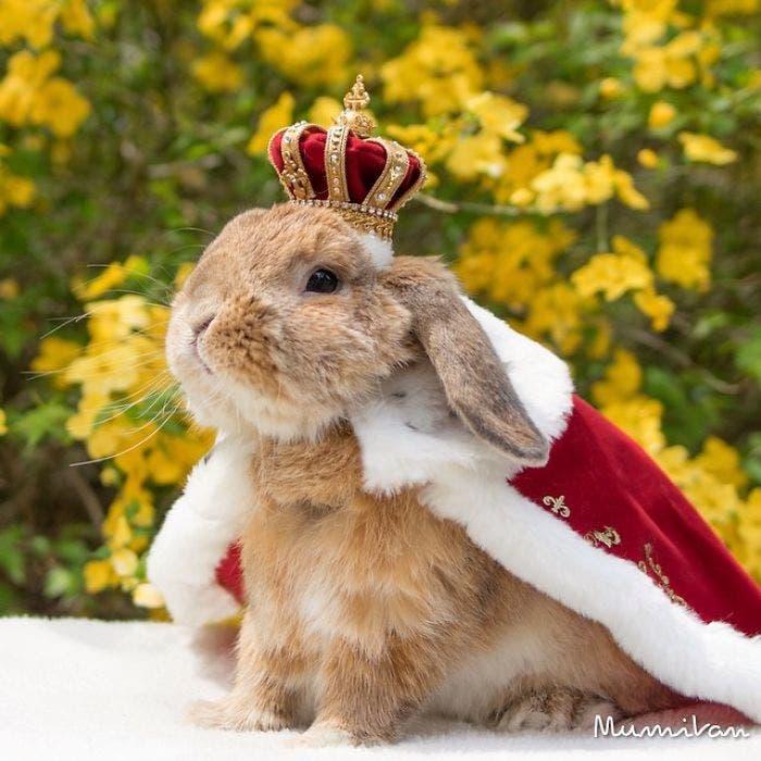 puipui-el-conejo-mas-fashionista-8