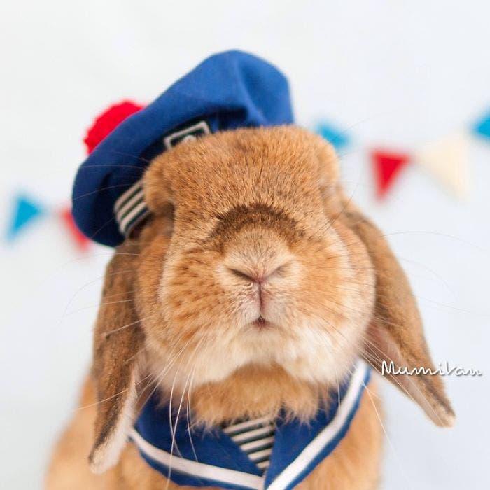 puipui-el-conejo-mas-fashionista-9