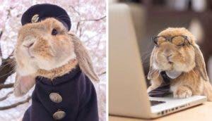 puipui-el-conejo-mas-fashionista-portada