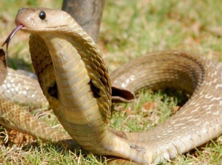 doberman-defiende-familia-de-4-cobras-2