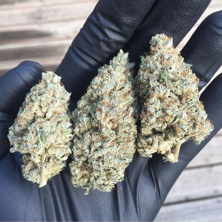 marihuana-estudios-medicinal-5
