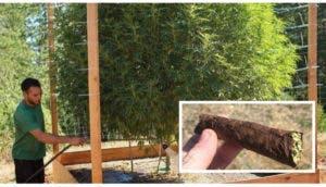 marihuana-estudios-medicinal-portada