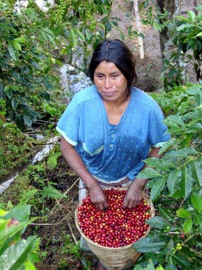alarmante-cafe-puede-extinguirse-7