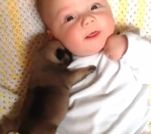 bebe-y-perro-recien-nacido1