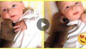 bebe-y-perro-recien-nacido33