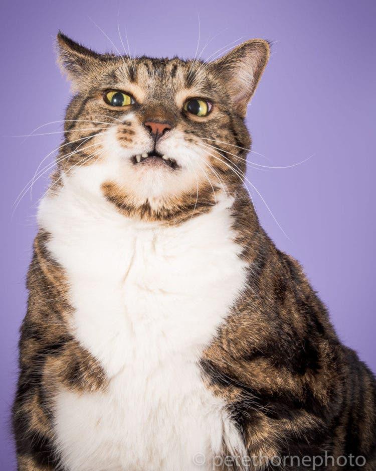 fotografia-gatos-gordos-11