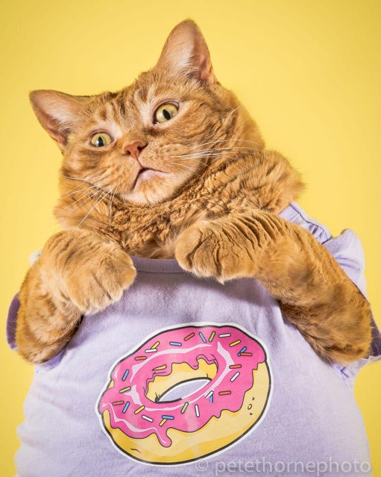 fotografia-gatos-gordos-3