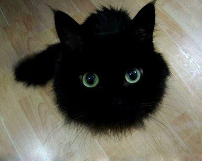 gato-chimuelo-2