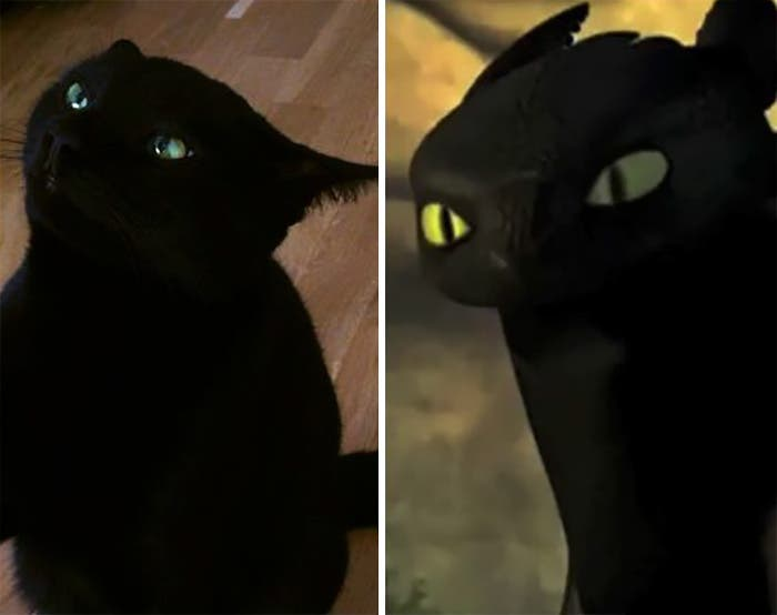 gato-chimuelo-3