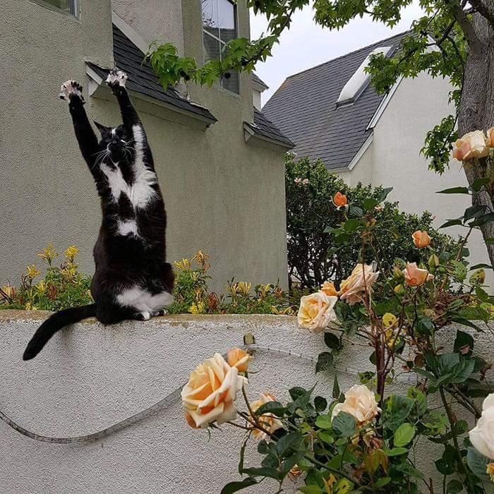gato_brazos_en_alto3